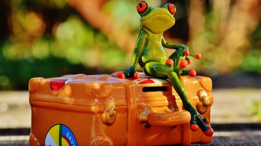 cropped-frog-1059816_19202.jpg