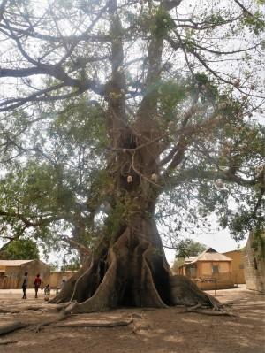 Les 3 arbres qui entremêlent leurs troncs